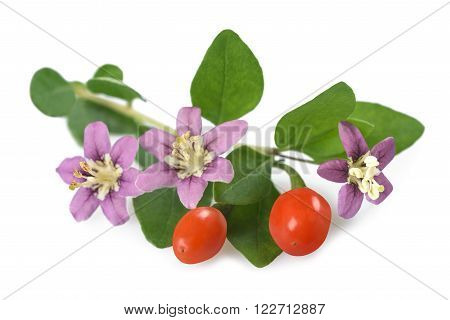 goji branch with berry flowers and leaves isolated on white