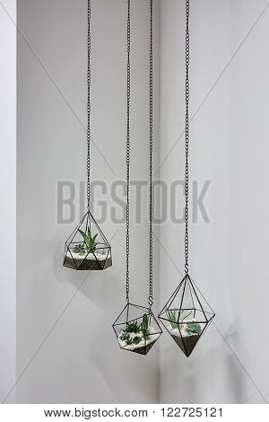Three glass vases with metallic frames. The vases are hanging on chains on the gray wall background. Inside vases there are plants, ground and pebbles.