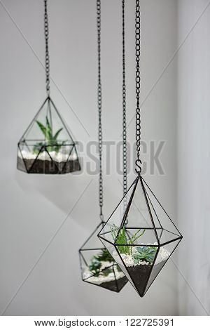 Three glass vases with metallic frames. The vases are hanging on chains on the gray wall background. Inside vases there are plants, ground and pebbles. Focus is on the nearer vase. Close-up photo.