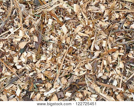 wooden sawdust texture such as nature background