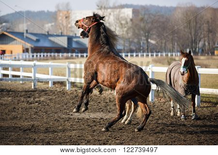 The jumping horses in manege at spring time outdoor