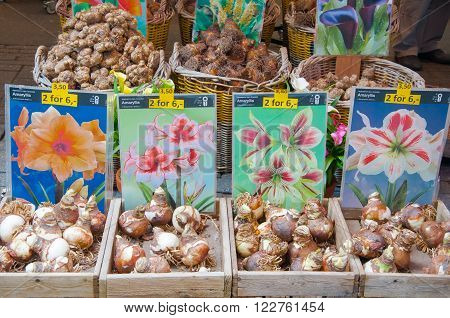 AMSTERDAM-APRIL 28: Shop inside of floating barge displays bulbs for sale on the Amsterdam Flower Market on April 282015.The Flower market is one of Amsterdam most colourful attractions.