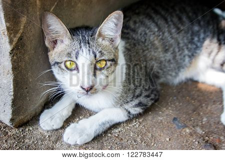 close up gold eye stray cat siting behind the stone