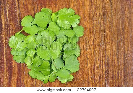 Fresh Coriander leaves coriandrum sativum also called pak chee cilantro and chinese parsley.