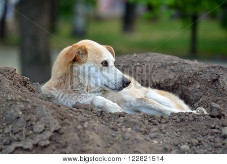 Stray dog lying on a pile of soil in the park