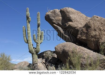 Huge Boulders and giant Saguaro cactus litter the Sonoran Desert landscape