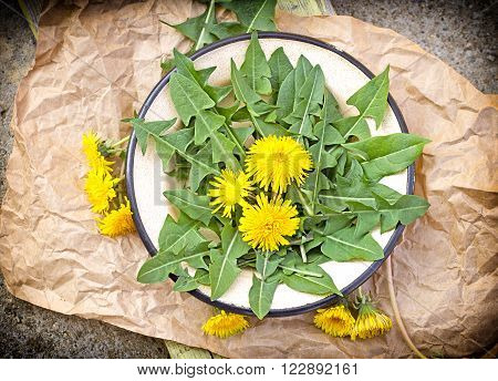 Fresh dandelion leaves - edible dandelion leaves on rustic plate