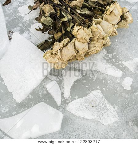 old wilted roses lie on the cold broken ice and nearby is the golden wedding ring