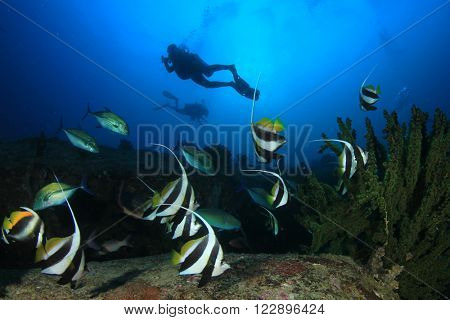 Scuba diving: divers explore coral reef with tropical fish underwater