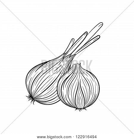 Onion. Vector hand drawn onion illustration isolated on white background - stock vector