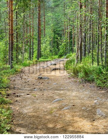 Road In The Northern Forest In Finland