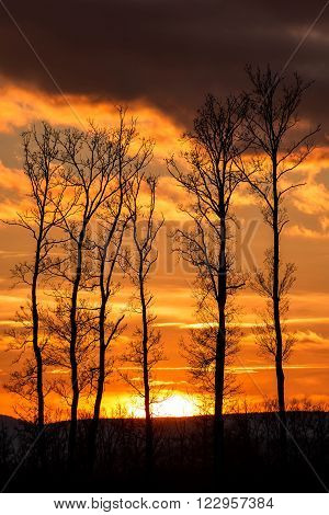 Beautiful sunset behind a clump of trees