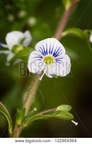 Macro photo of beautiful small wild flower