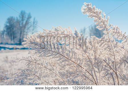 Nature landscape of delicate hoar frost on foliage with tree bokeh in the background.