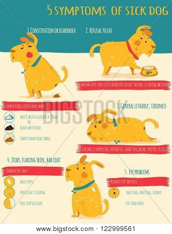 Vector infographics in bright colors and flat line style - dog care and health - design template for prints and veterinary clinic websites