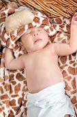 Portrait of Beautiful Boy Lying in Wicker Basket. Adorable Baby Asleep in His Cradle by a Window. Kid Sleeps in Knitted Crib with Tiger Patterns on Blanket. Cute Little Newborn Girl Sleeping in Cradle poster