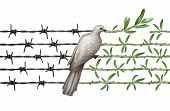 Optimism concept and diplomacy hope symbol as a dove on barbed wire to olive branches as an icon for good will of man and a respect for humanity and a global safer world or a greeting for earth day isolated on white. poster