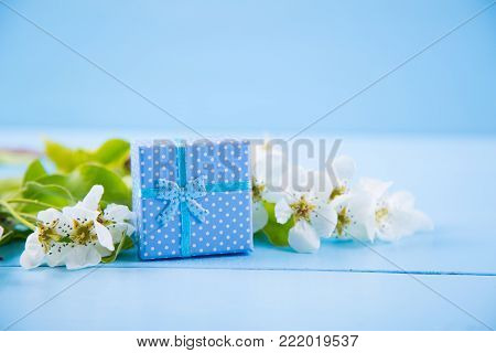 Blue Gift Box Surrounded With Blooming White Apricot Branches On Blue Wooden Background