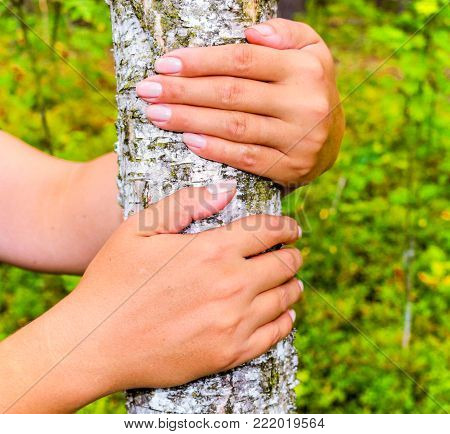The girl hands hugging a tree trunk. To hold the birch. The concept of unity with nature. Draw strength from nature