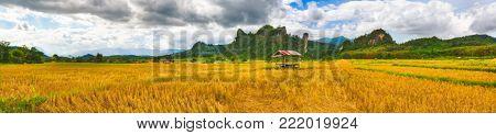 Rice field and mountains. Beautiful rural landscape. Vang Vieng, Laos. Panorama