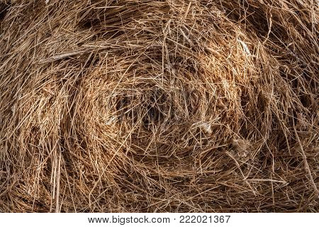 Close-up natural background of sunlit round bale of hay.