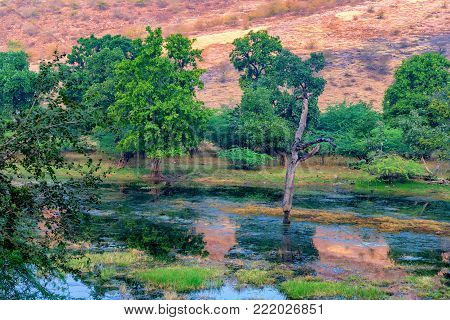 Scenic view of marshland landscape in Ranthambore national park, Rajastan, India.