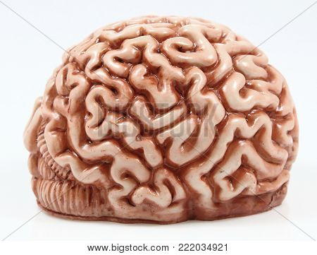 Model of a brain on neutral background