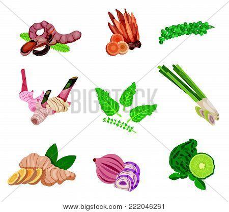 Asian food ingredient set with tamarind, ginger, shallot, basil, galingale, galangal, lemongrass, kaffir lime, and green peppercorn, illustration, vector