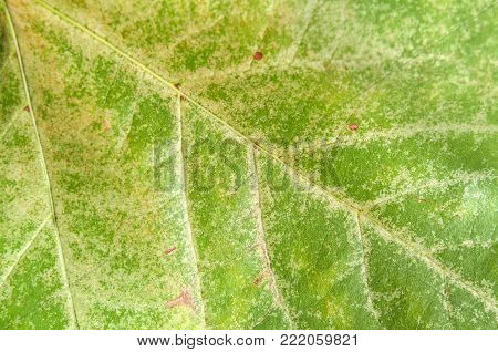 Green macro leaf shoot like healthy natural garden botany texture poster