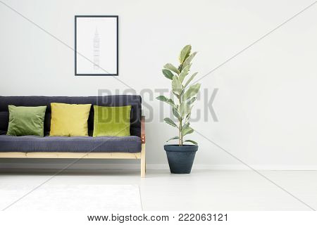 Plant In Bright Living Room