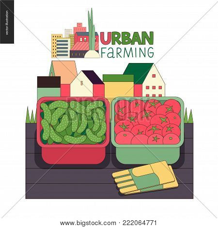 Urban farming, gardening or agriculture, harvest. Two containers filled with cucumbers and tomatos standing on the deck and gauntlets, with town houses on the background. Farming logo.