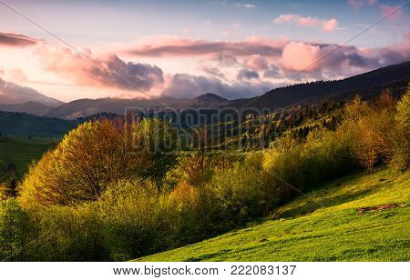 forested hill at cloudy sunset in springtime. beautiful scenery in Carpathian mountains. location - Mizhirya district of TransCarpathian region, Ukraine