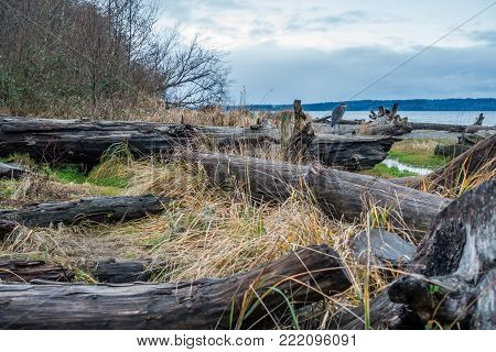 A view of the shoreline and a Blue Heron on driftwood logs.