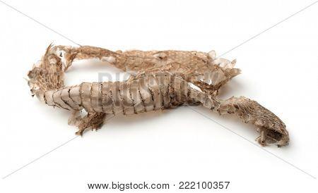 Snake shedding skin isolated on white