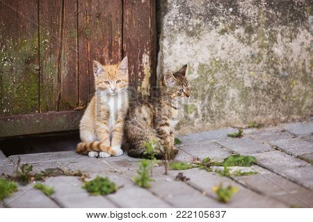 Two little cats are sitting on the street. Lovely cat. Cats are sitting on the street. Red and gray cats. Cats on the wall background. Little cute cats