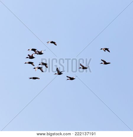 flock of birds in the sky . In the park in nature