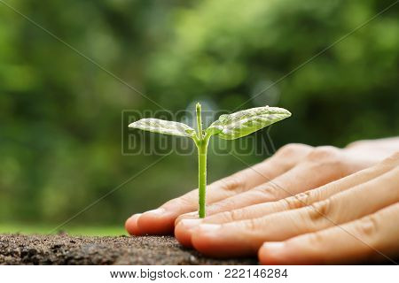 Hands growing and nurturing tree with green bokeh background / Love and protect nature concept
