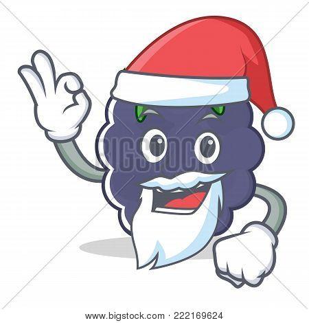 Santa blackberry mascot cartoon style vector illustration
