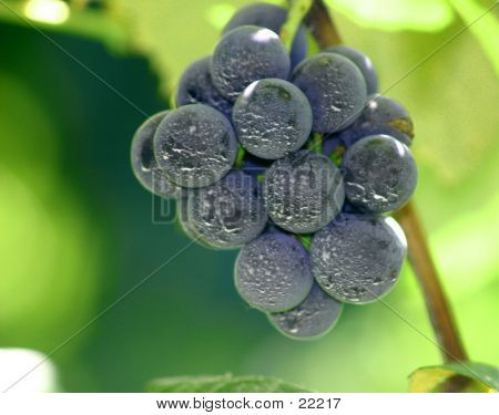 Grapes Upclose
