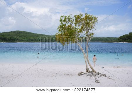 Tree at awesome freshwater lake in Great Sandy National Park - Fraser Island, Lake McKenzie, QLD, Australia