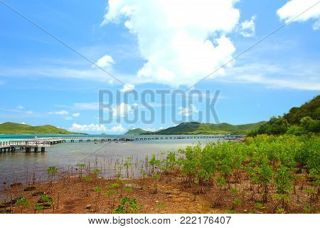 The Nature Education Center for Mangrove Conservation and Ecotourism in Sattahip Chonburi Province, Gulf of Thailand.