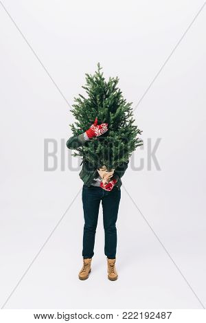 obscured view of person in winter sweater and mittens holding fir tree in hands isolated on white