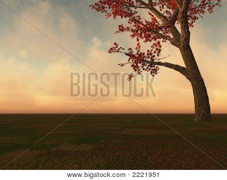 Fall Maple Tree On Horizon