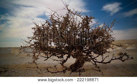 View to haloxylon in White desert at Farafra, Sahara, Egypt