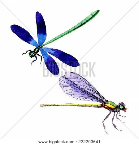 Exotic dragonfly wild insect in a watercolor style isolated. Full name of the insect: dragonfly. Aquarelle wild insect for background, texture, wrapper pattern or tattoo.
