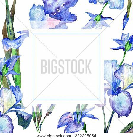 Wildflower iris  flower frame in a watercolor style. Full name of the plant: iris. Aquarelle wild flower for background, texture, wrapper pattern, frame or border.