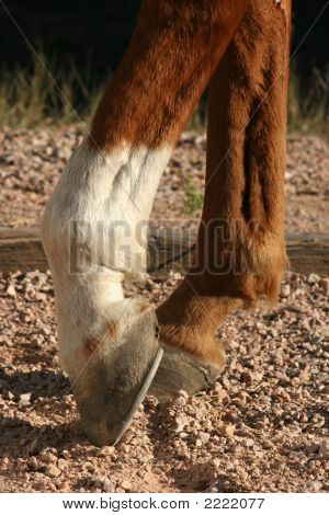 Horse Hooves Close Up
