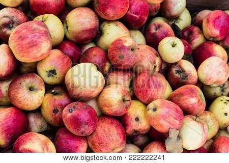 fresh colorful apples in a wooden box on market at daytime