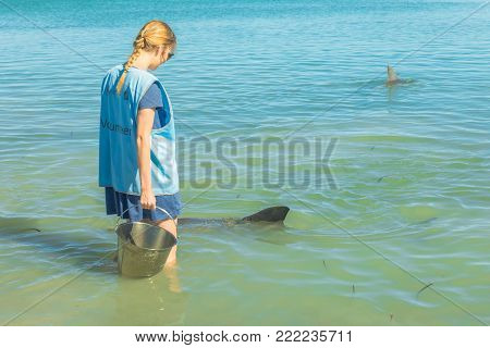 Monkey Mia, Australia - Dec 21, 2017: a ranger during a feeding session with a dolphin. Monkey is the only place in Australia visited daily by dolphins. Coral coast, Shark Bay, Western Australia