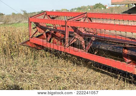 Harvesting of soybean field with combine. Detail of harvester. Agriculture soy crop.